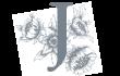 Jacinto Logo